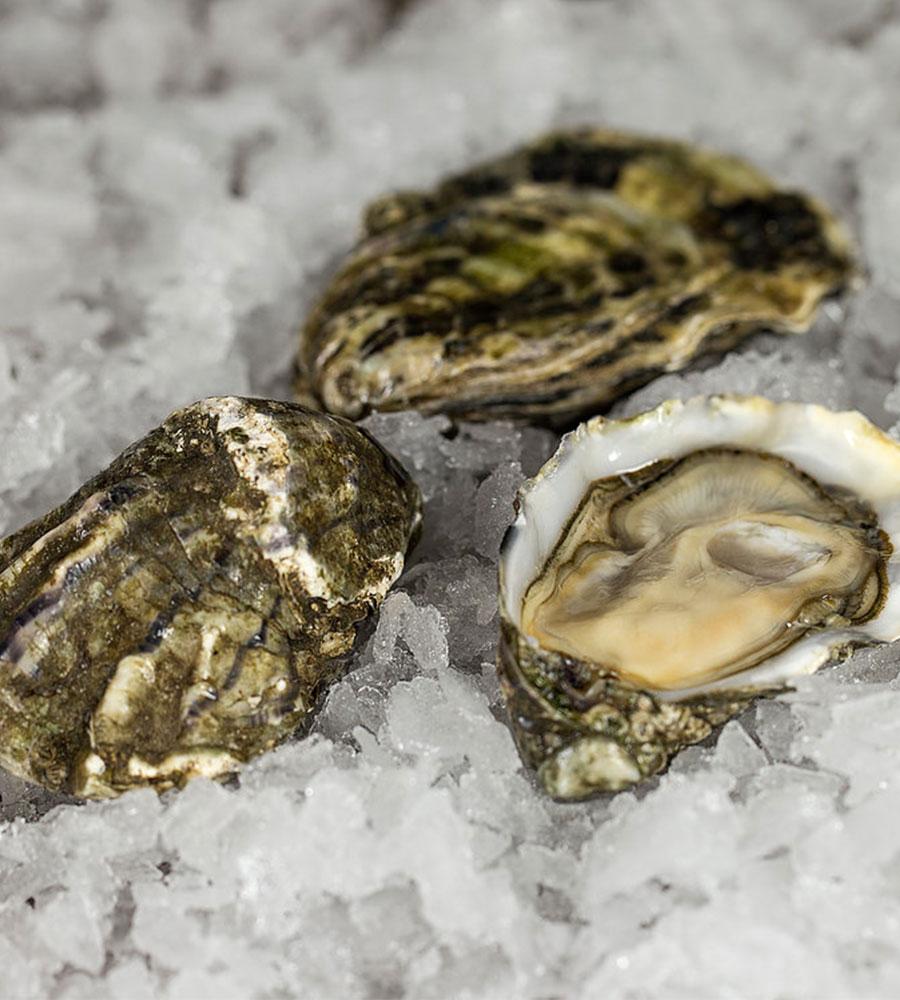 Thomas Buehner Shop – Austern